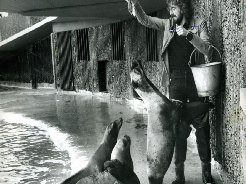 Gazette reporter Robin Duke feeds the sea lions at Blackpool Zoo in November 1974. It was all part of a Gazette series called A Day in the life of...