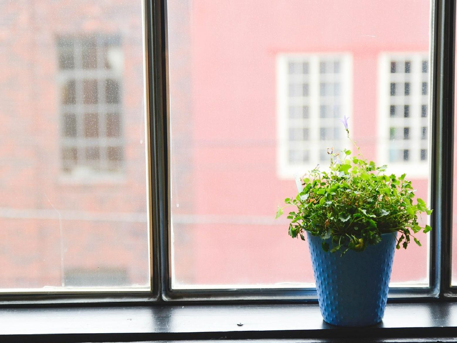 Your house plants can help make your house a healthier place to be
