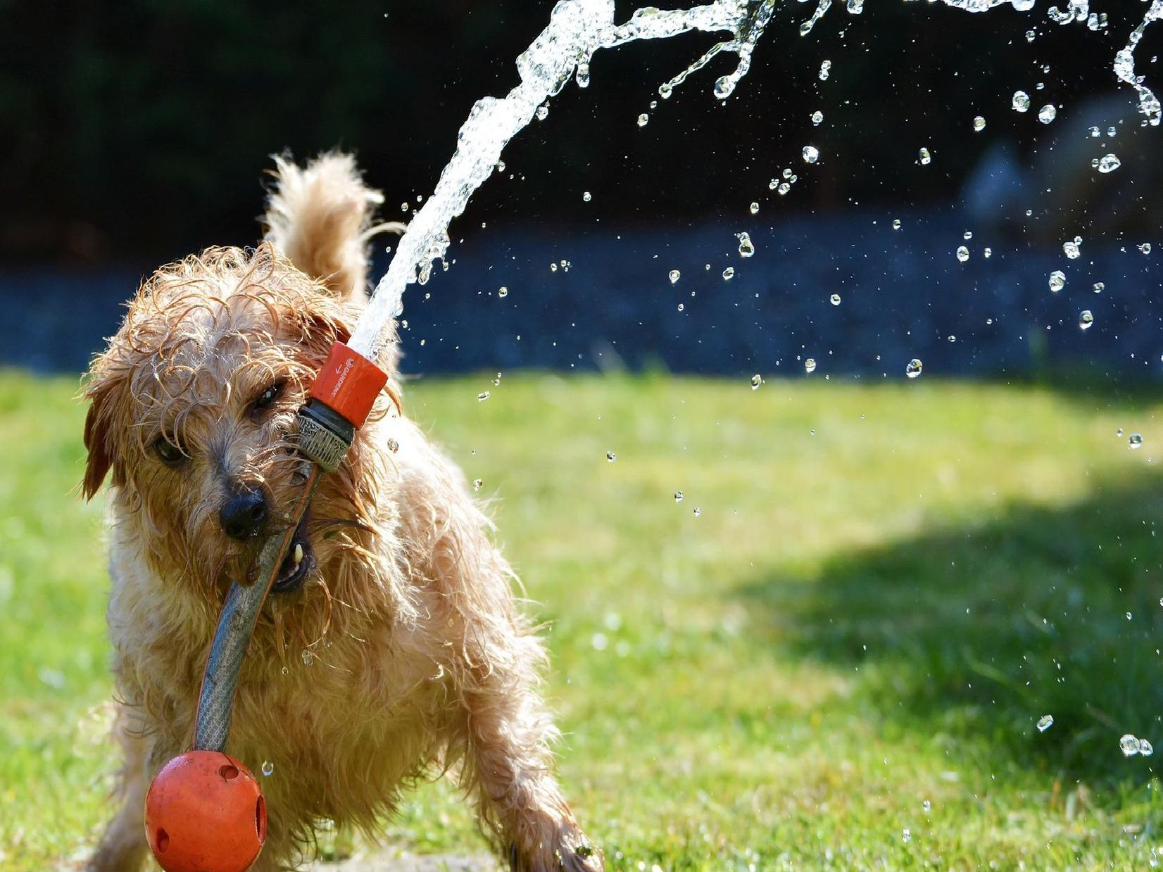 Play time can suddenly cause problems for you and your dog if you're not careful