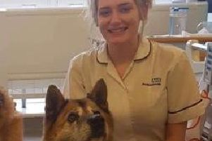 Elle Reynolds with Sumi, one of Chesterfield Royal Hospital's therapy dogs.