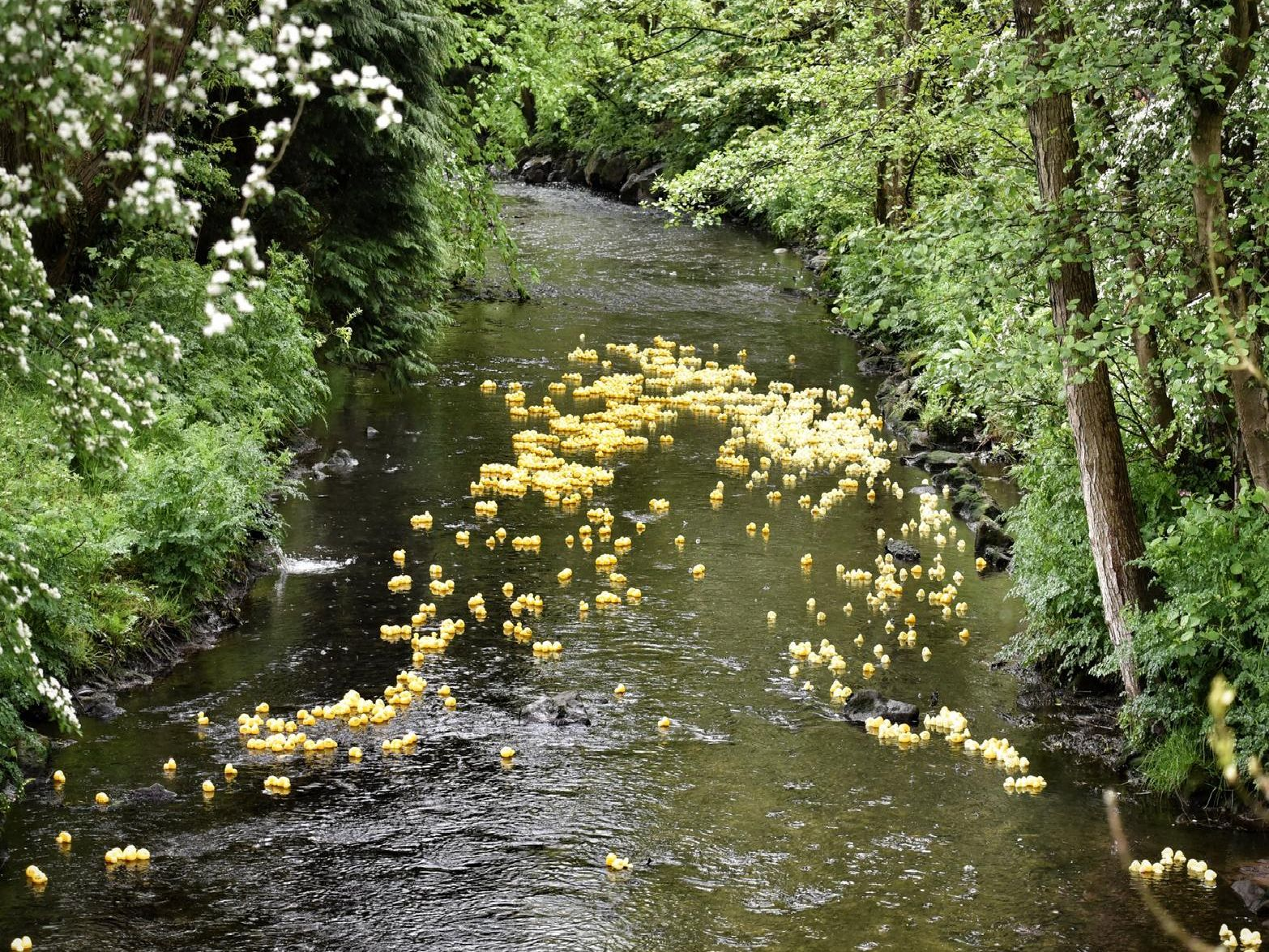 The Ducks make their way down the river