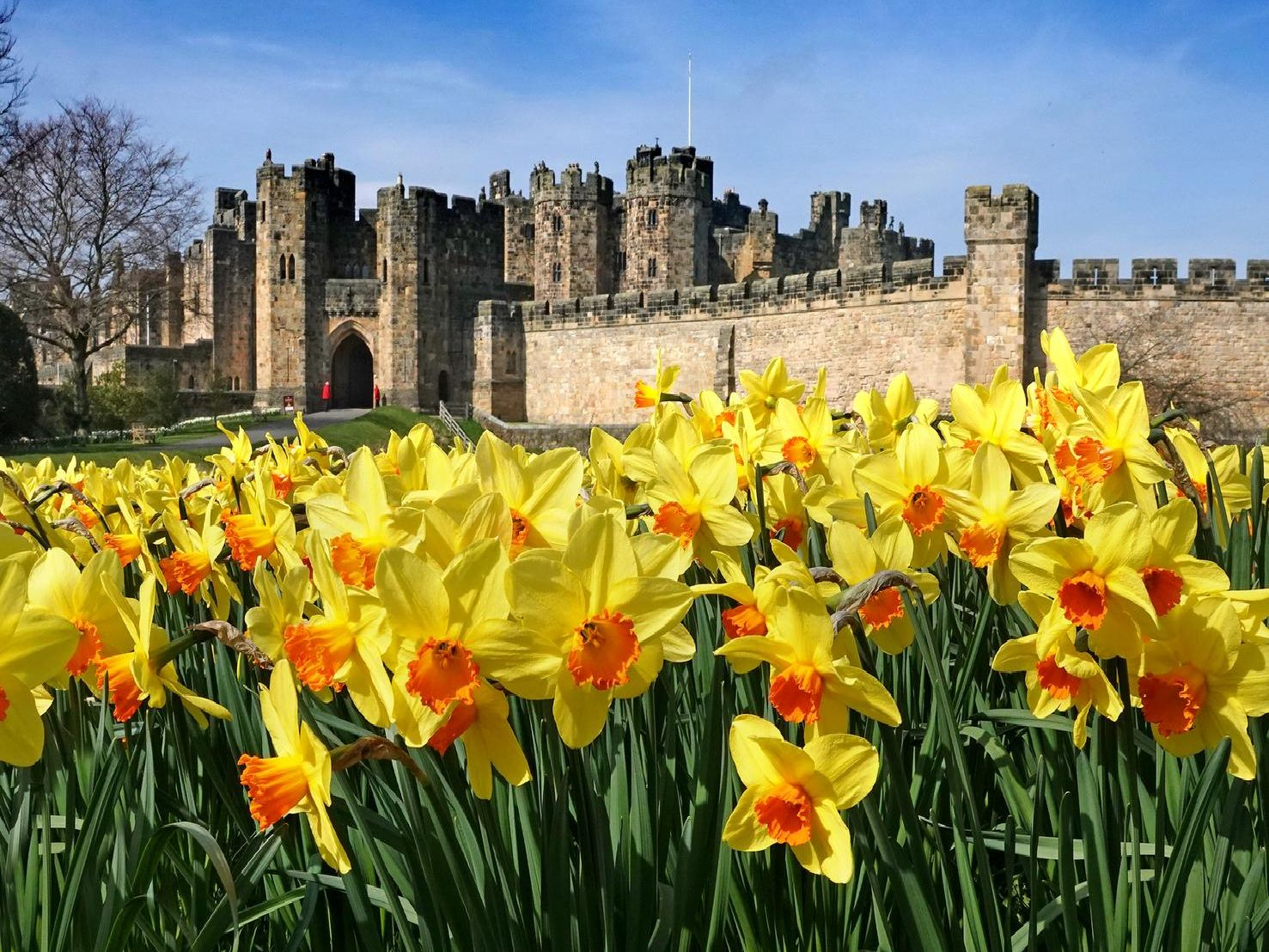 A floral delight at Alnwick Castle - photographs by Jane Coltman.