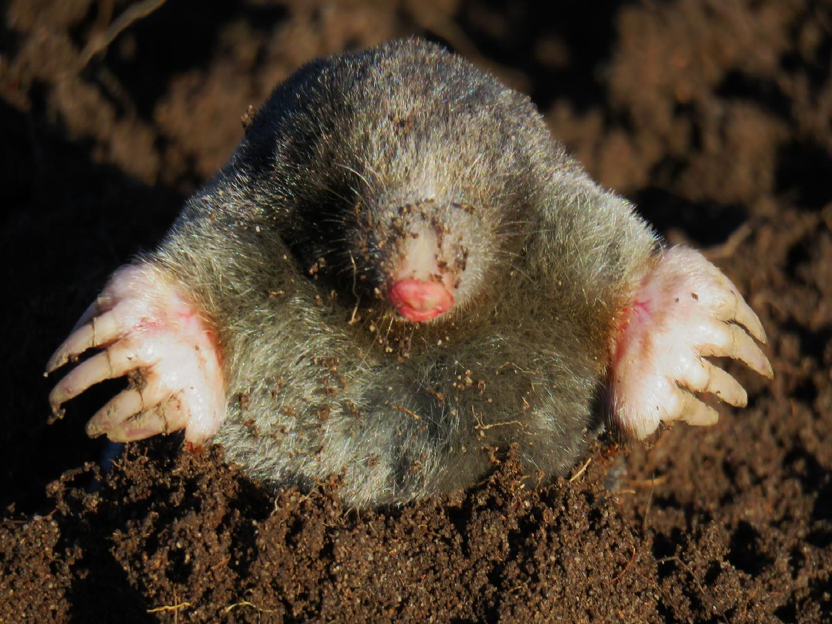 Trevor Harris timed this magnificent shot perfectly as a mole popped up out of the ground.