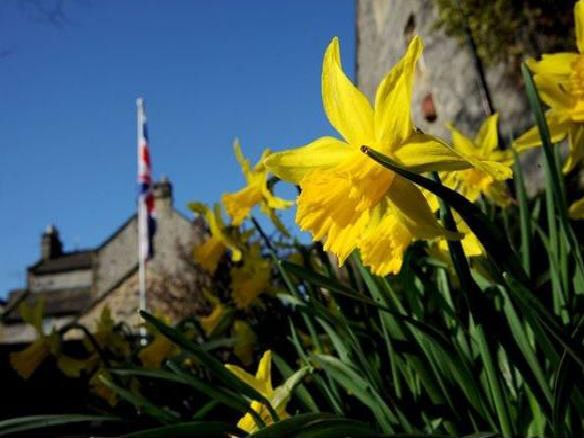Sunny daffodils in Bakewell- taken by Anne Shelley.
