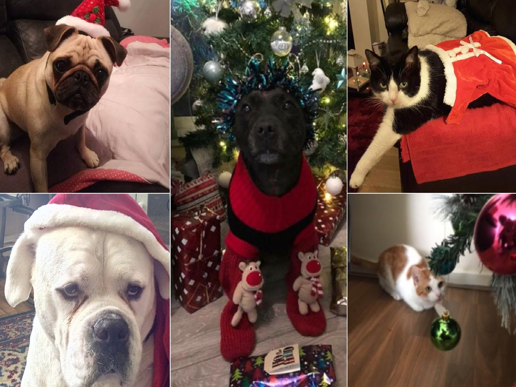 Some of your Santa Paws pictures so far - looking good!