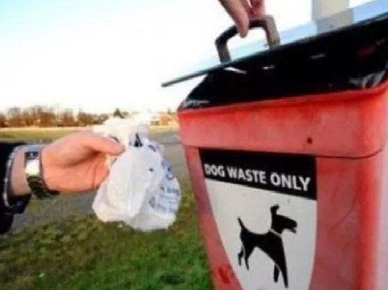 Some dog owners do not clear up after their dogs.