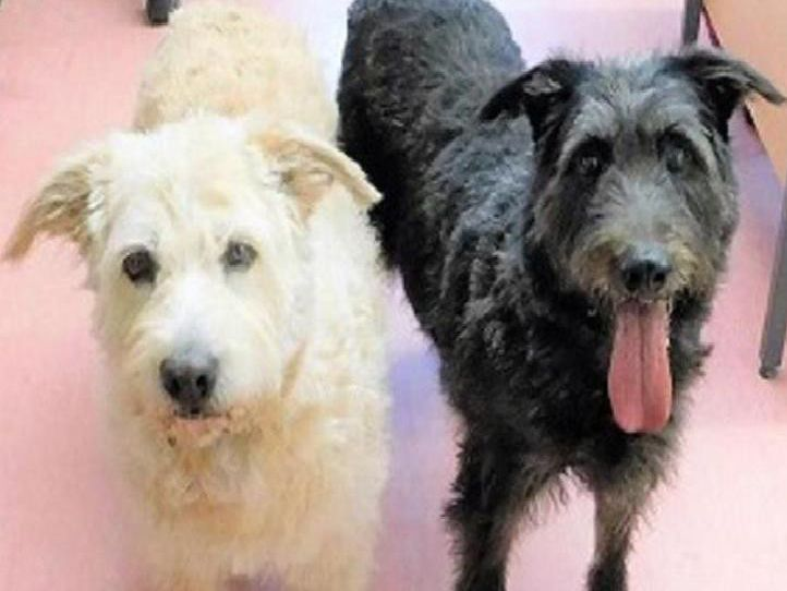 These sweet girls are very close to each other and would love to find a home together where they can get the fuss and comfort they deserve.