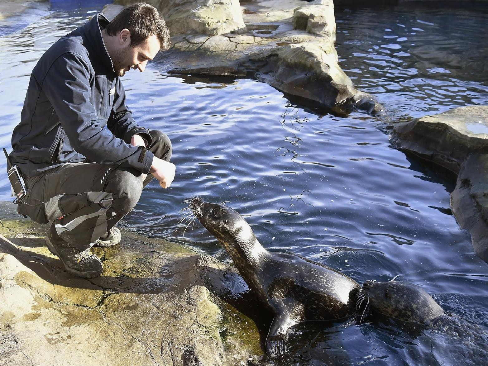 Aquarist Jordan Woodhead greets the seals