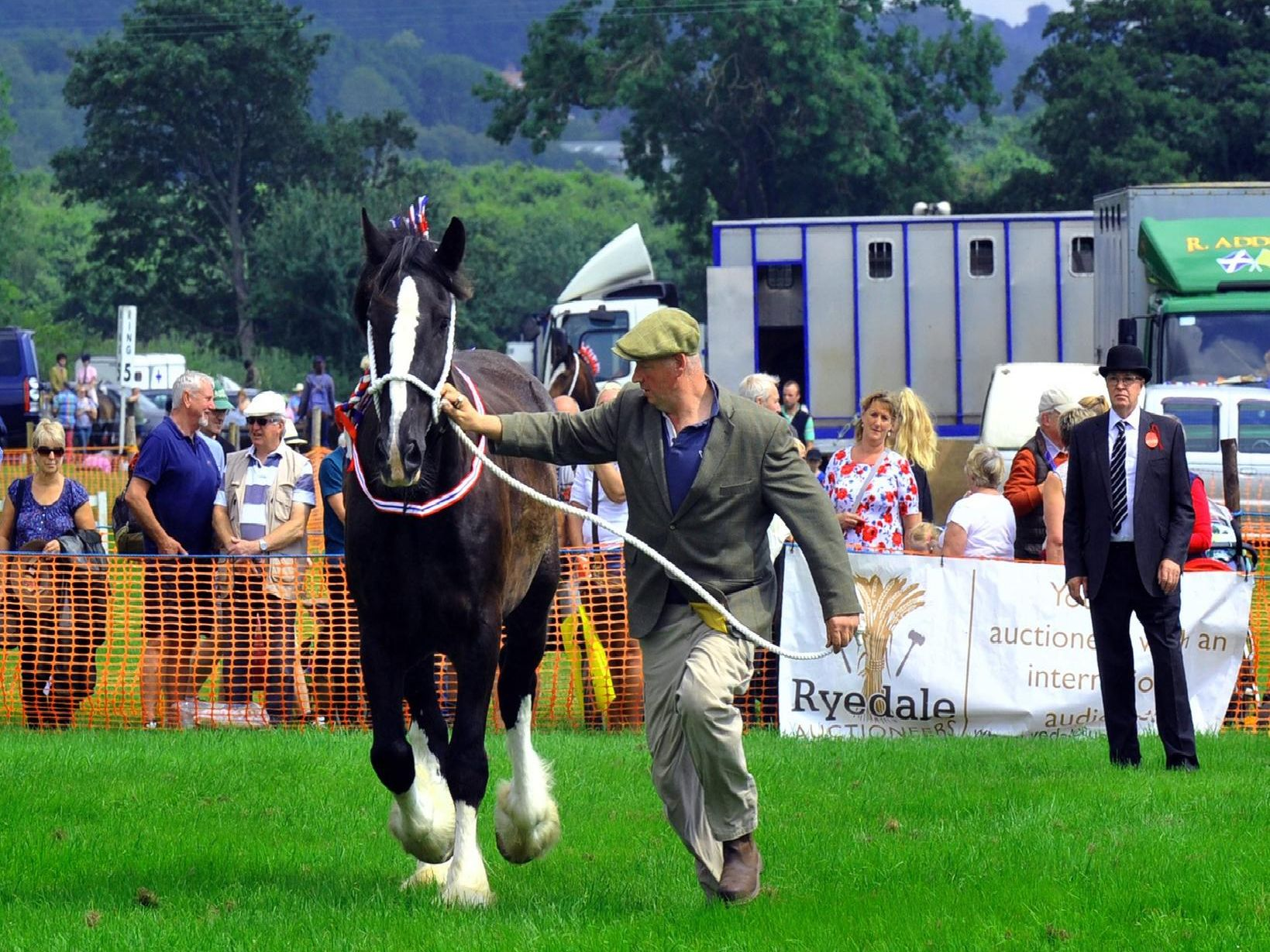 The heavy horses are put through their paces during judging at Ryedale Show