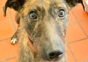 Can you find a home for Holly?