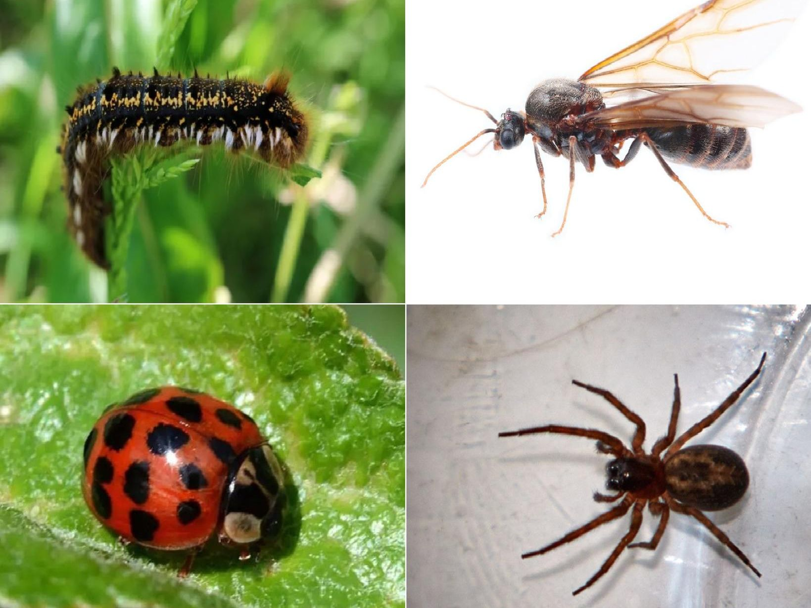 Some of the insects you can expect in 2019 - and when