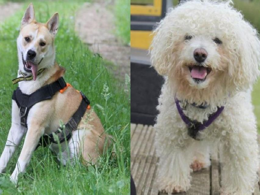 These adorable rescue pups and dogs are all desperately seeking a permanent, loving new home in Leeds