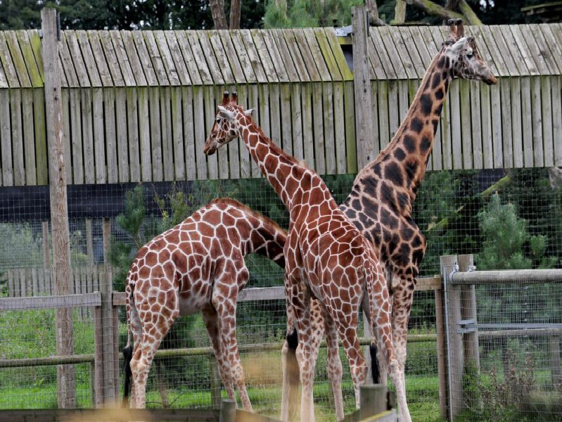 The Yorkshire Wildlife Park. 14th August 2019. Picture by Simon Hulme