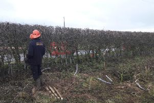 The annual hedgelaying competition involving Myerscough College students.