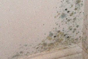 Mould can cause serious health problems