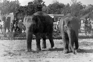 An early photo of the elephants at Blackpool Zoo