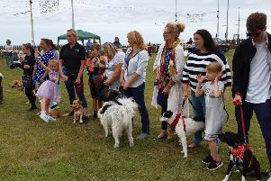 Romanian mutts are stars of Blackpool charity dog show