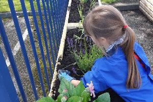 New space: Early years children have created an area to attract wildlife.