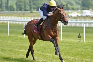 Crystal Ocean, one of the leading fancies for this Saturday's big race, the King George VI and Queen Elizabeth Stakes, at Ascot.