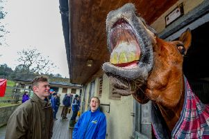 It's all smiles from this resident of Mark Johnston's yard in Middleham, Yorkshire at an open day there earlier this year. Could Johnston himself be full of joy after one of his crack 2yos wins at Royal Ascot? (PHOTO BY: James Hardisty, Yorkshire Post Newspapers)