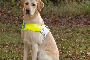 Pennard the guide dog