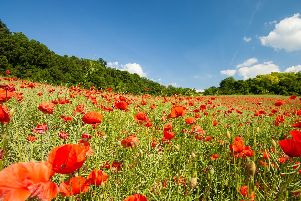 All the Lancashire remembrance events, parade and services.