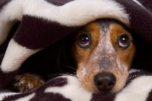 Does your pooch find Bonfire Night stressful?