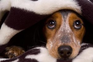 For most, the booms, bangs and colourful fireworks are a pure delight, however, for many pets they can be terrifying.