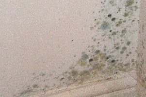 Mouldy wall due to house damp