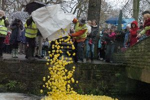 Duck Race Endcliffe Park. The ducks are launched