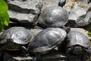 These terrapins are enjoying a spot of sunbathing. A fabulous shot captured by Diana Wood.