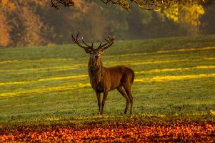 Don't allow stags to get too close