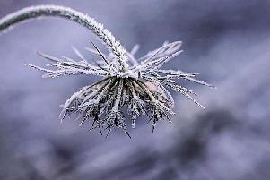 There could be frost in some areas of the region.