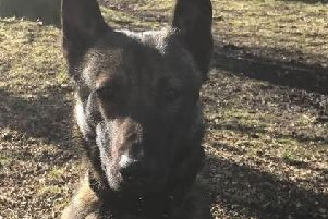 PD Jax and his handler have recovered a machete, crowbar and knives suspected of being used in the attack on a Runshaw College pupil on Monday, March 4.