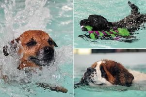 Could canines soon be learning the doggy paddle at the former Brighouse swimming baths