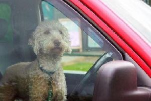 What to do if you see a dog in a car on a warm day.