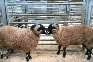 We didn't managed to sell either of our tups so we will probably take them to Skipton.