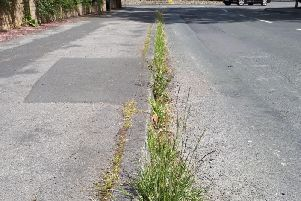 Harrogate today - Weeds flourishing in the Pannal Ash area of Harrogate. (Picture supplied by Harrogate and Pannal Ash Residents Association (HAPARA)