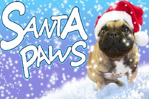 It's time to send in your Santa Paws pet pictures.