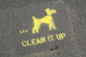 What do you think would help with dog fouling in Hartlepool?