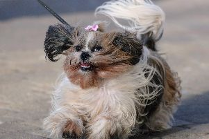 It's set to be another windy one today