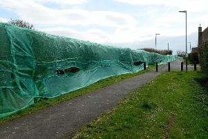 Netting was put over a hedgerow along Worset Lane, Hartlepool earlier this year while planning permission on a housing development was awaited. Picture by Frank Reid.