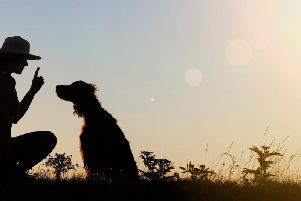Training starts from the moment your dog comes home.