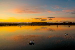 Thursday 16th November 2017  Castleford  United Kingdom.  Picture by Charlotte Graham''Picture Shows Swans on the water in Morning Light