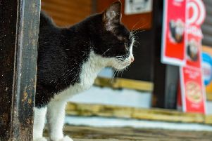 51 stray cats were rehomed