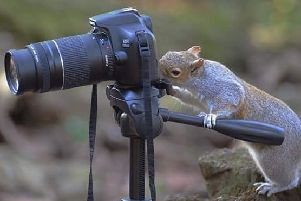 Lights, camera, action!...this inquisitive squirrel decided to take a turn behind the camera. An incredible shot captured by Mandy Pickering.