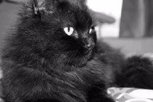 Diesel the cat from Morecambe who had life-saving surgery after being shot and run over.