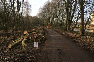 Tree felling along the Millennium Path.