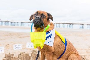 Pets as Therapy dogs were treated to a day out at Blackpool beach  Picture: Jonathan Pow/jp@jonathanpow.com