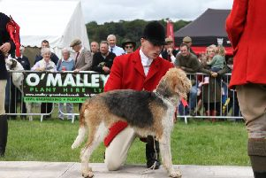 A hound show is one of the main attractions at The Lowther Show, being held at the Lowther Estate, near Penrith